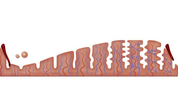 ženské menstruační cyklus