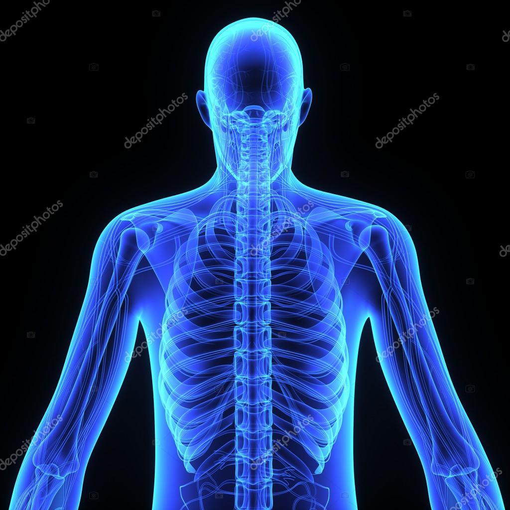 Anatomía humana en negro — Fotos de Stock © sciencepics #76746023