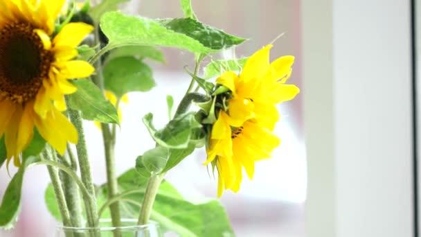 Slunečnice kytice izolované na světlém pozadí. Média. Jasně žluté květy se zelenými stonky na bílém hřbetě