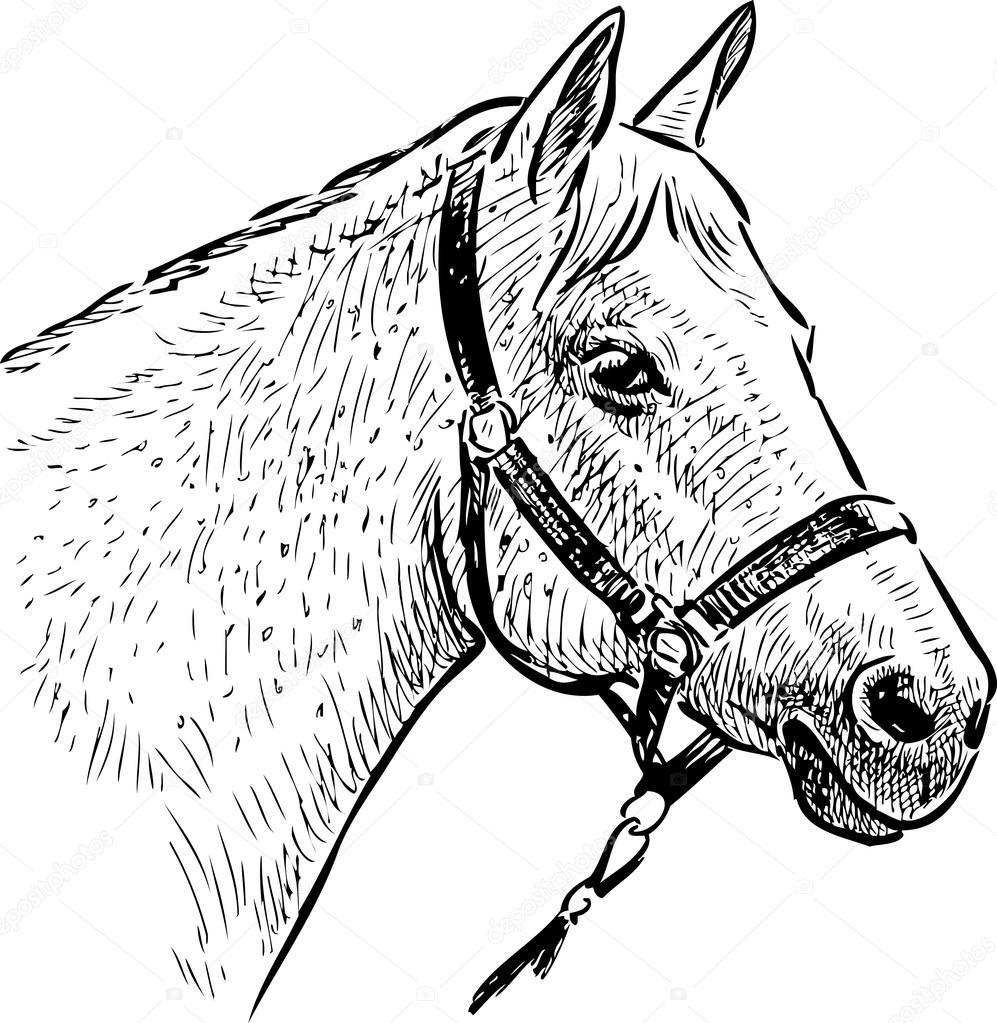 desenho da cabeça do cavalo vetor de stock alekseimakarov 107374432