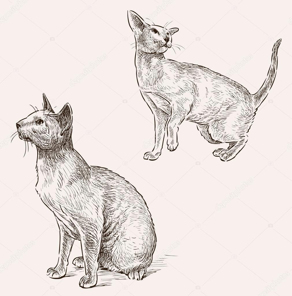 sphynx cat sketches stock vector alekseimakarov 78634504