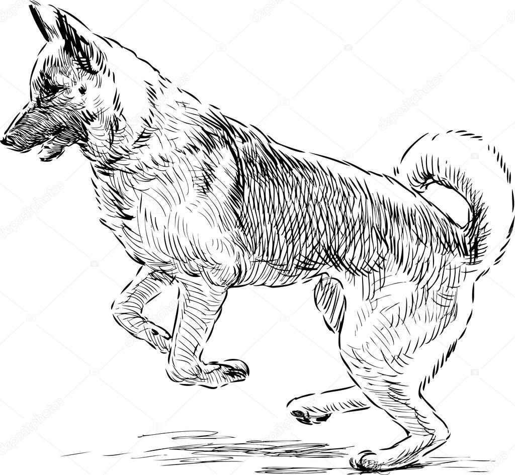 duitse herder in een stap springen stockvector