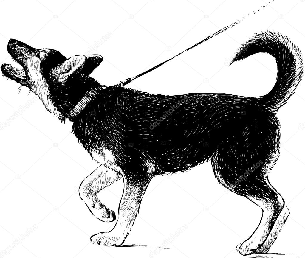 Картинки раскраски собака лает