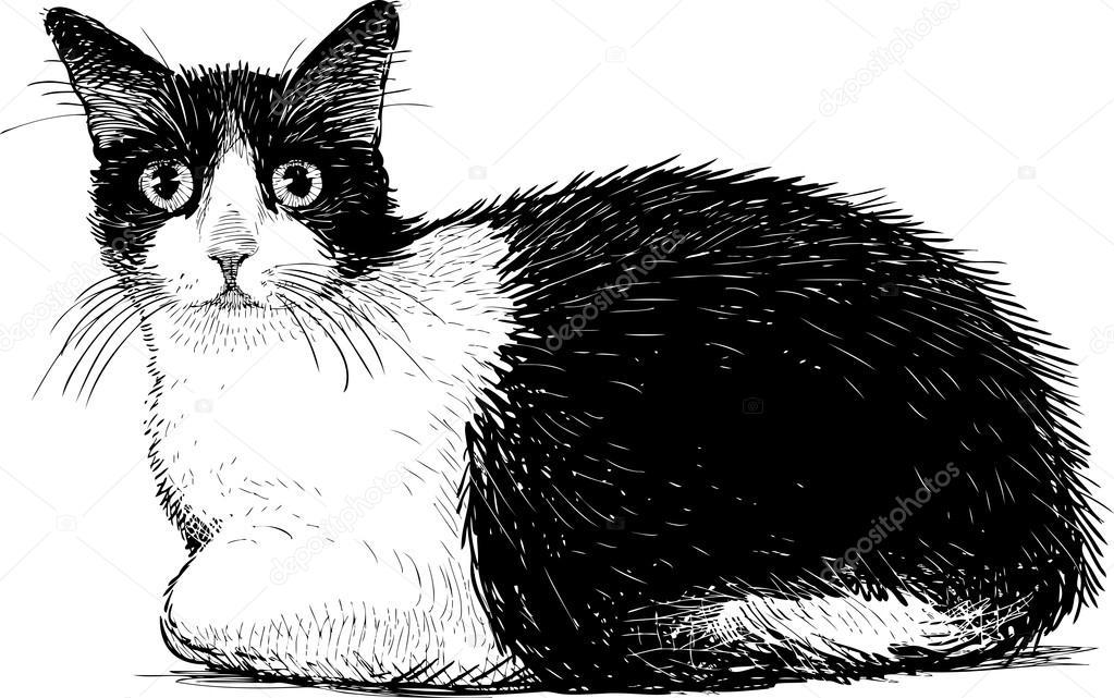 Vector Gato Blanco Negro Gato Blanco Y Negro Vector De Stock