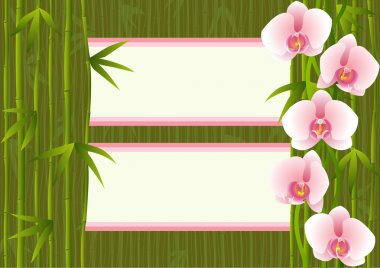 Background with orchids bamboo and 2 text places