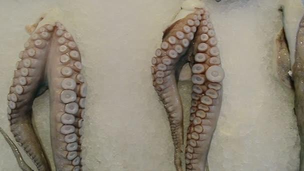 Slow Motion: Zblízka chobotnice a kalamáry na rybí trh