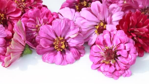Virágos virágzat tsiniya fehér alapon
