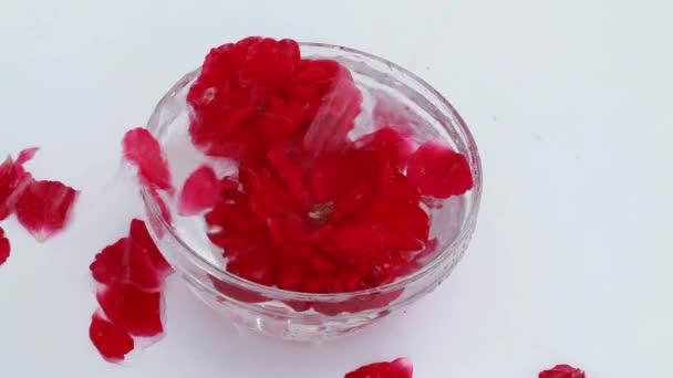 A rügyek, a rózsa egy üveg tálba, vízzel