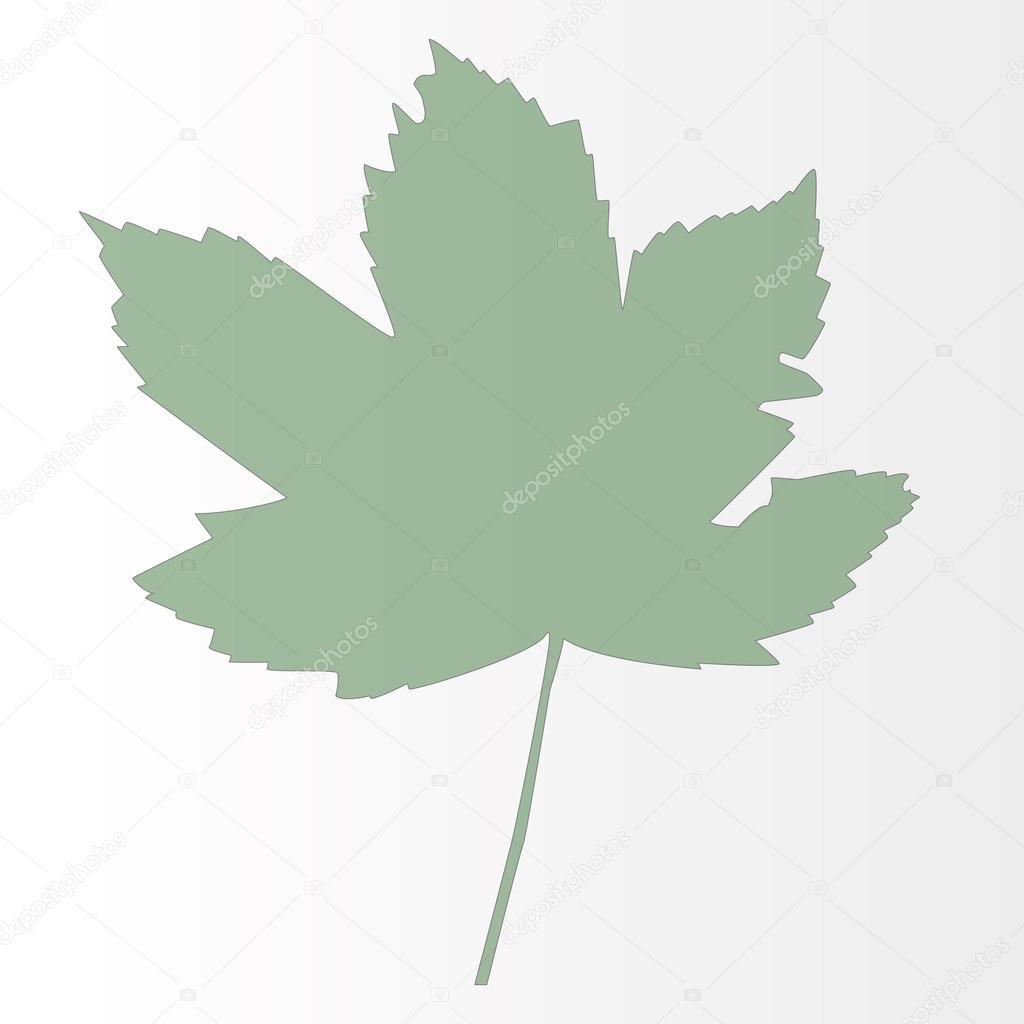 Dessin d 39 une feuille d 39 rable verte grand vectoriel image vectorielle msanca 54038425 - Dessin d une feuille ...