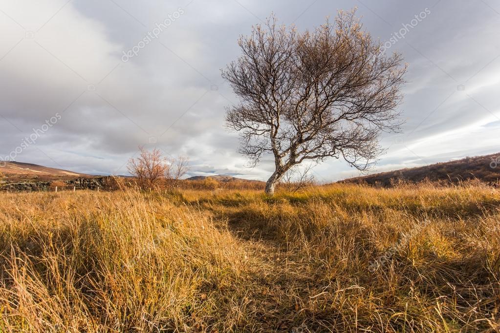 Landschaft Mit Einem Baum Herbst Island Stockfoto C Msanca 88276656