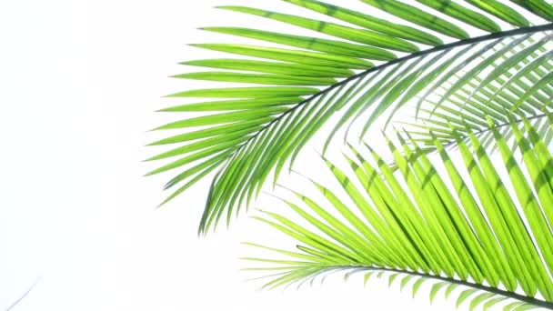 tropical palm leaves swaying in the wind and white background