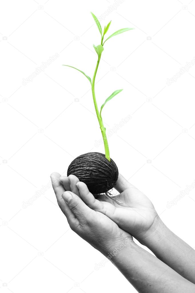 Hand holding seed  with a new life