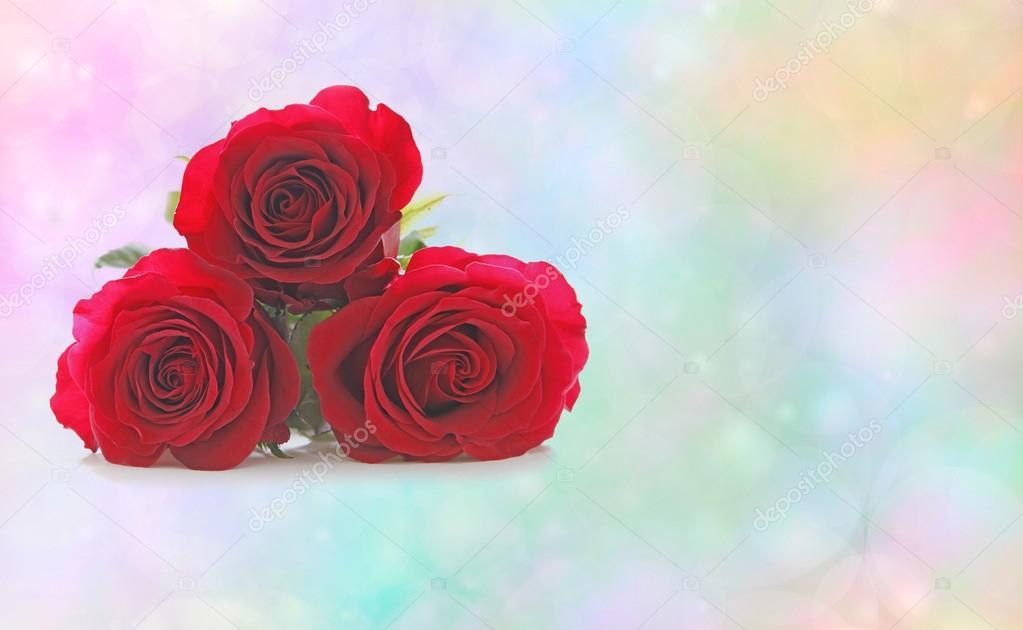 Tres Hermosas Rosas Rojas Para Alguien Especial Fotos De Stock