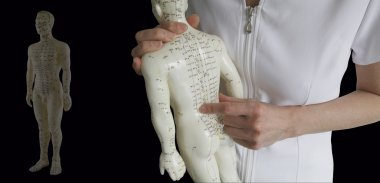 Acupuncture Model - Traditional Chinese Medicine Training