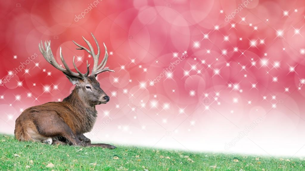 Christmas Stag on a festive background