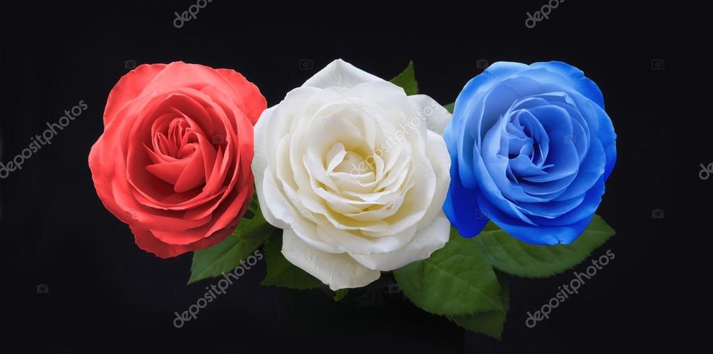 Imágenes Rosas Rojas Y Azules Rosas Rojas Simbólicas Del Blancos