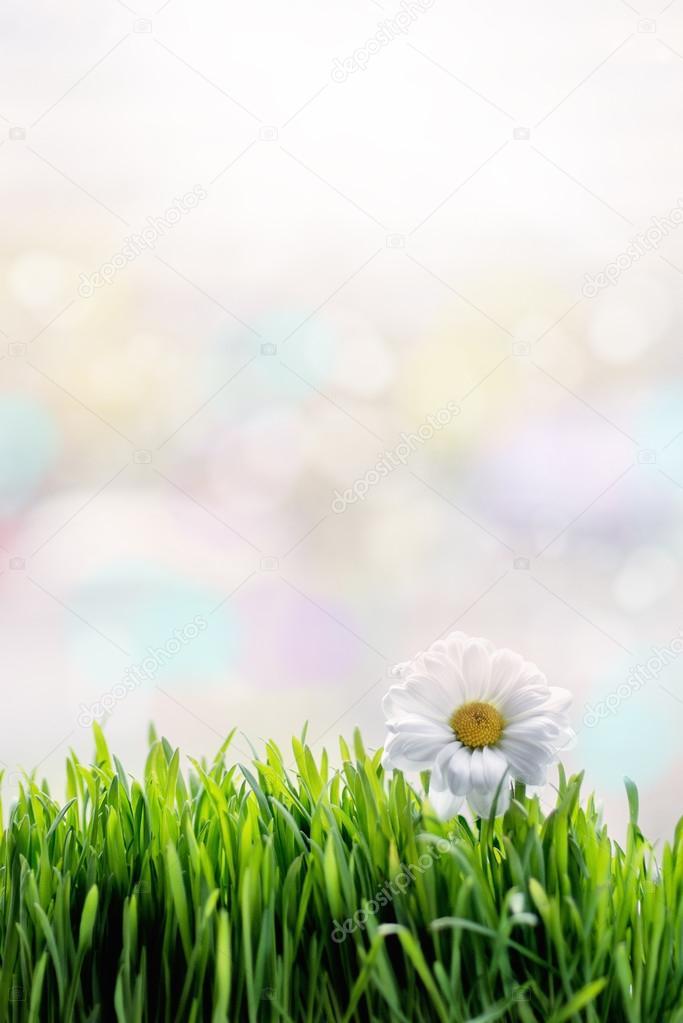 White flower on the green grass
