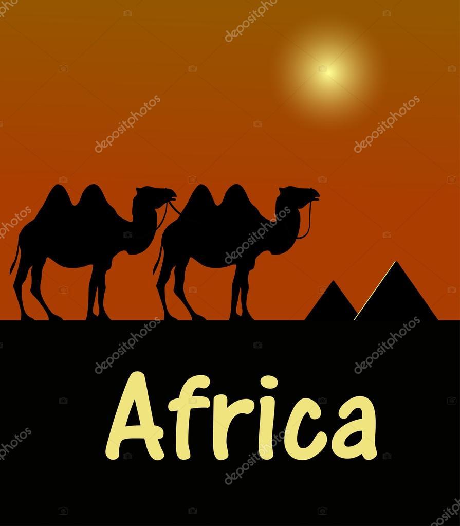camello en el desierto egipcio de la plantilla — Archivo Imágenes ...
