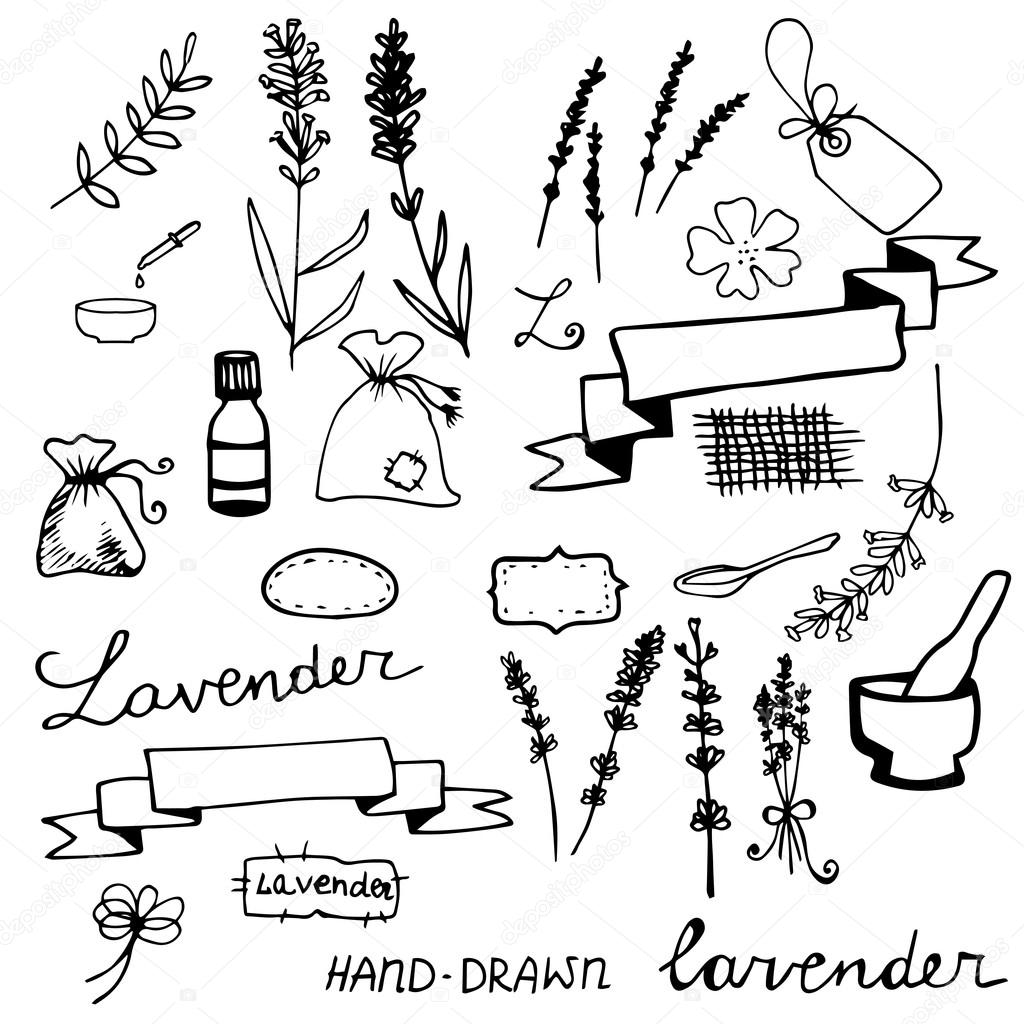 Hand drawn lavander set
