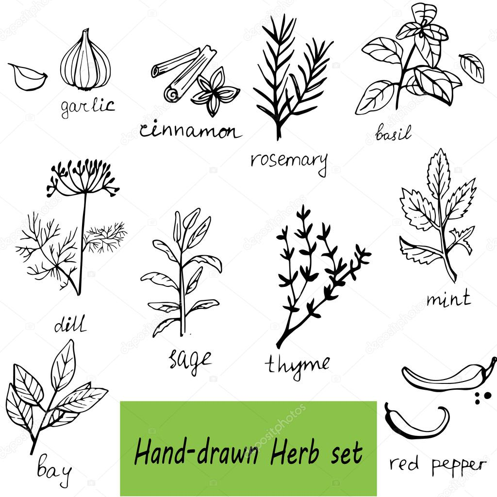 Vector background hand drawn herbs and spices set