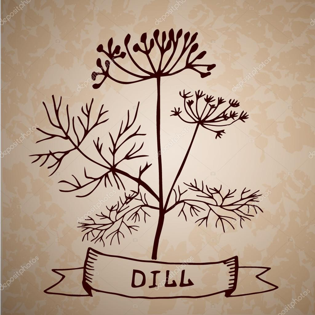 Dill herb with leaf and flower isolated