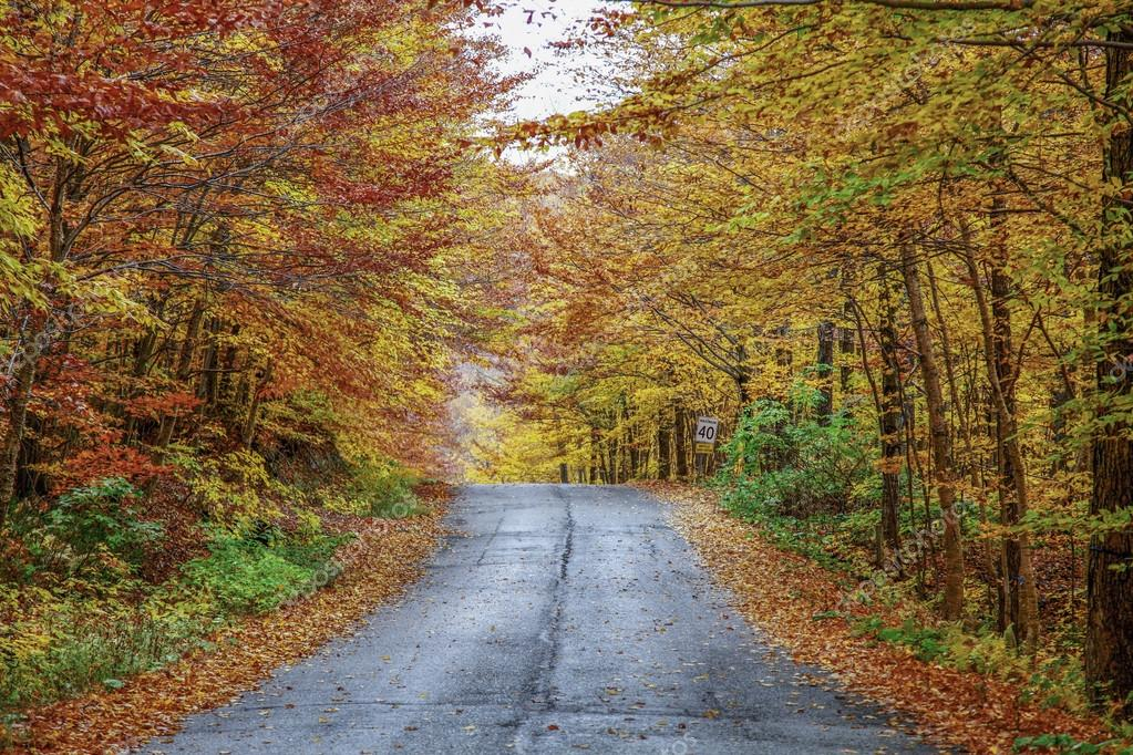 Rainy autumn afternoon on a country road located in Quebec, Canada.