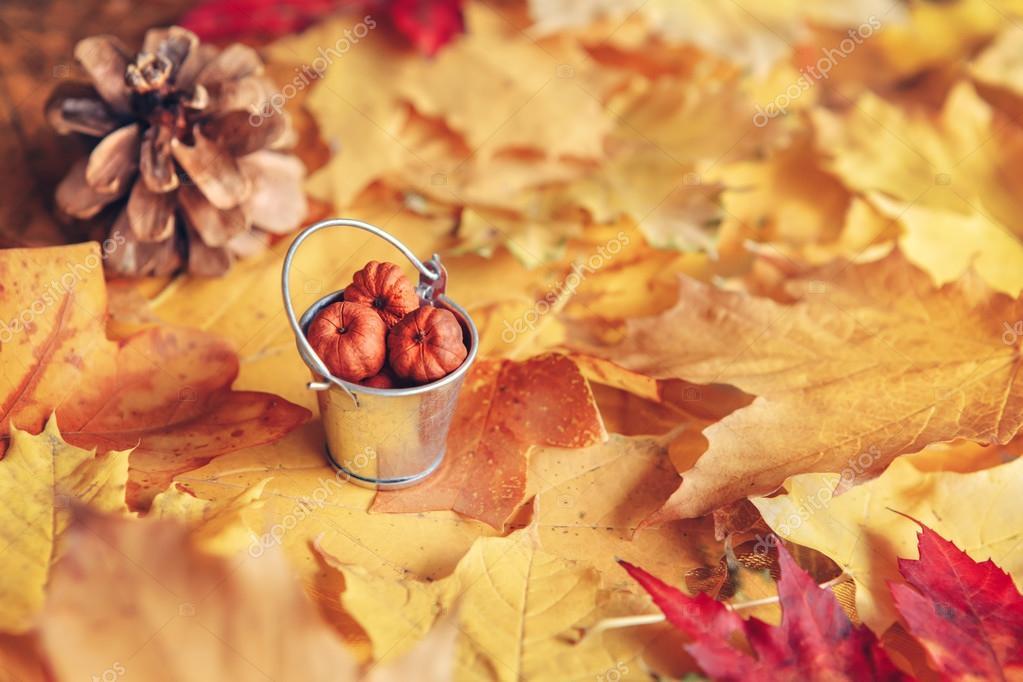 木の実とコラボ紅葉の壁紙