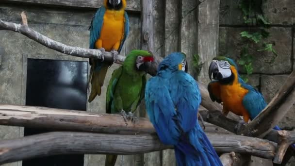 Vögel einer Federdatierung Senioren-Fisch-Dating uk Login