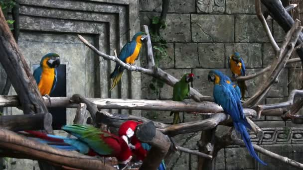 Flock of bright colored macaws
