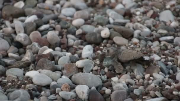 Želva Baby (Caretta Carretta) prochází k moři. Cirali, Turecko