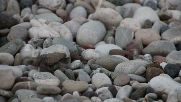 Želva dítě prochází k moři. Cirali, Turecko.