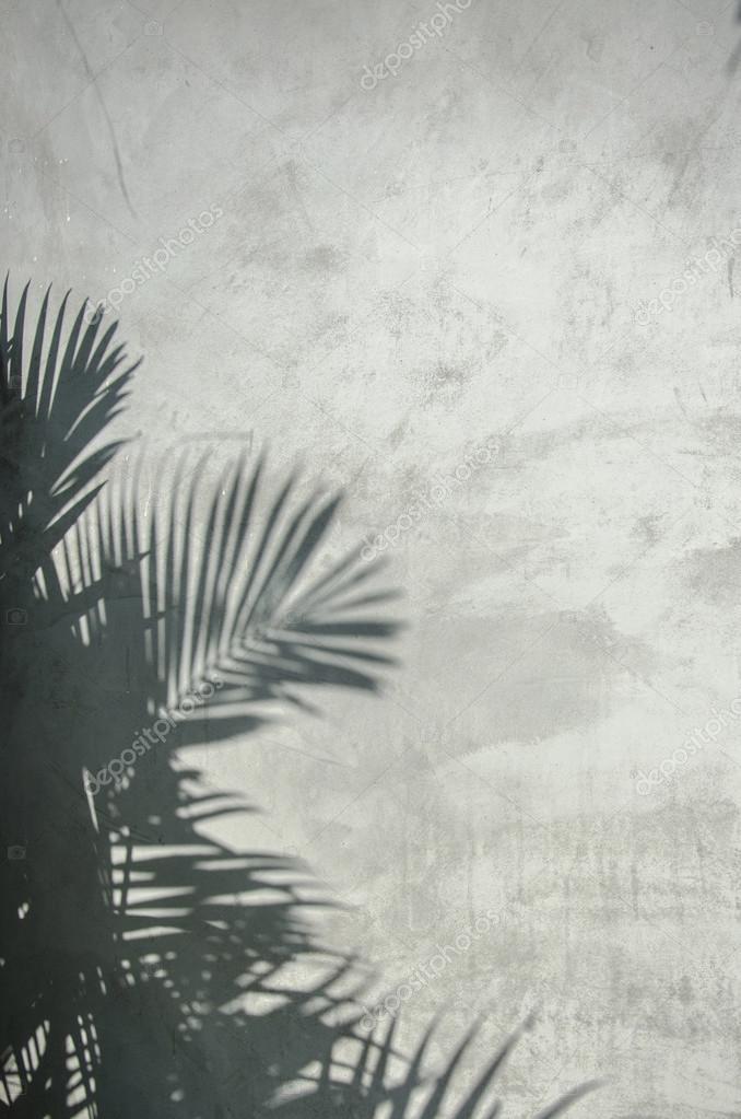 palm leaf shadow on the wall