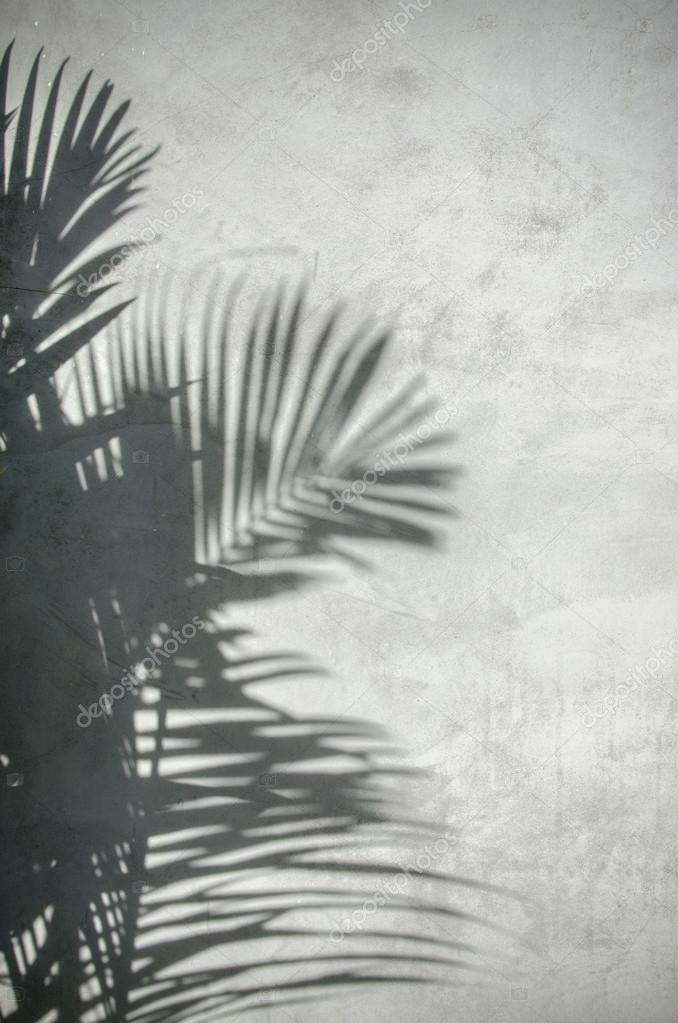 palm leaf shadow on the wall