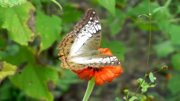 Szekrény hatalmas pillangó fényes színű virágok a kertben.
