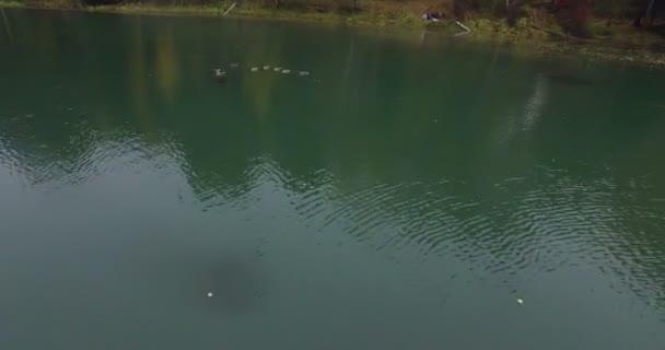 FLYIN nad divoké kachny, plavání v jezeře