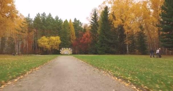Színes őszi levelek a fák az erdő felett repülő