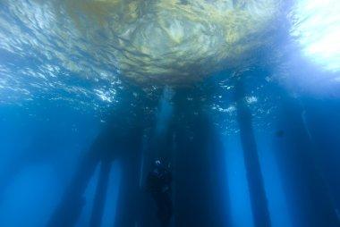 Underwater Scuba Diving California Pacific Ocean