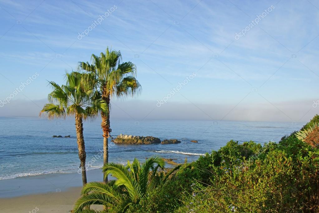 Beach Palm Trees At California Coast Stock Photo