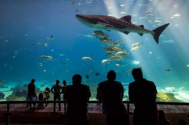 Many kinds of fish swimming in aquarium