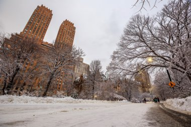 Central Park after the Snow Strom Linus