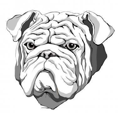 Hipster bulldog. hand drawn dog