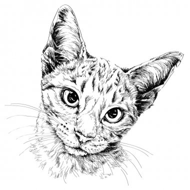 Cat portrait. Hand drawn
