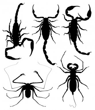 Illustration of Scorpions on wight background.