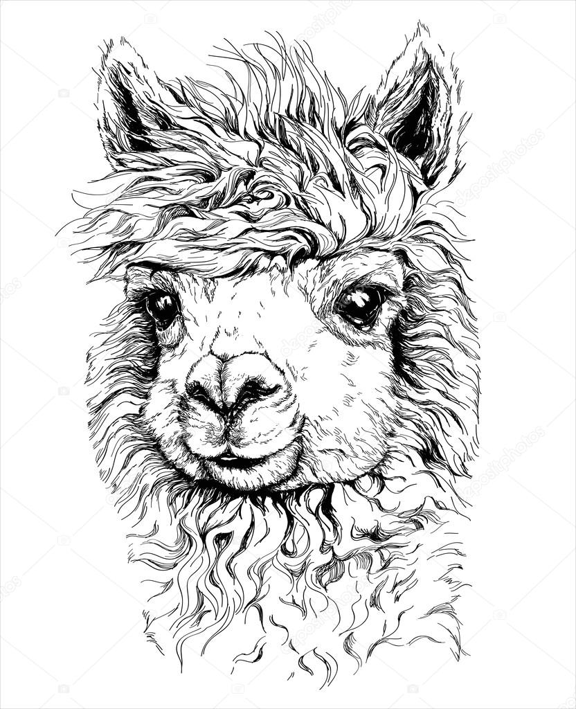 alpaca #hashtag