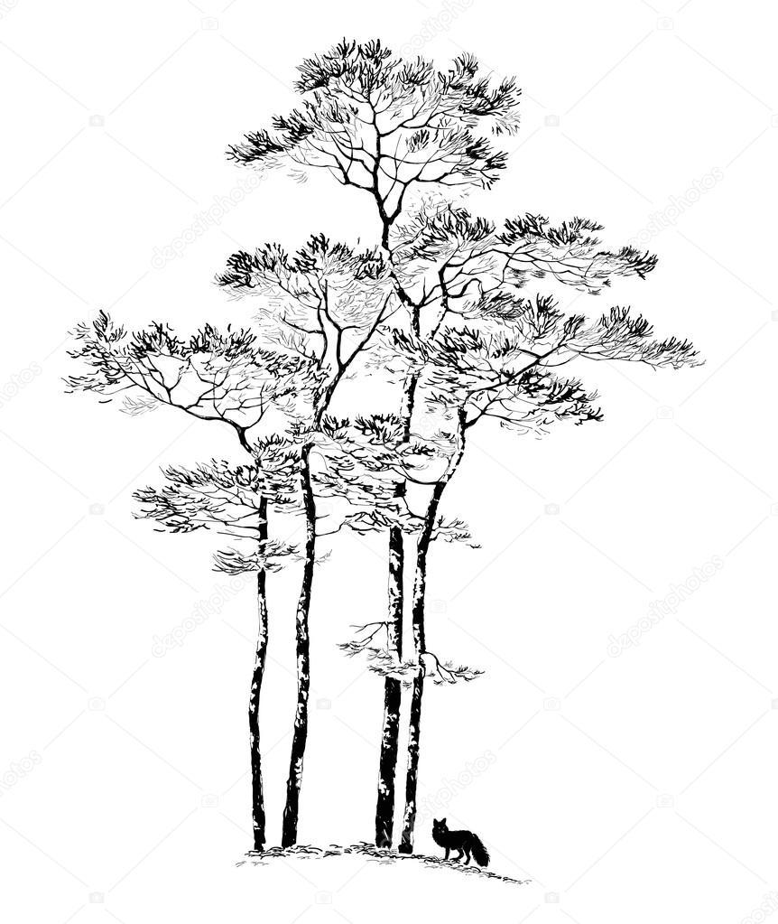 Деревья показать рисунок сосны 7