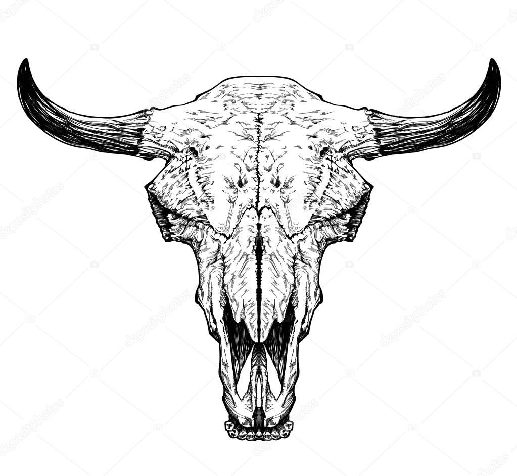 bull auroch skull with horns stock vector diana pryadieva 67093465. Black Bedroom Furniture Sets. Home Design Ideas