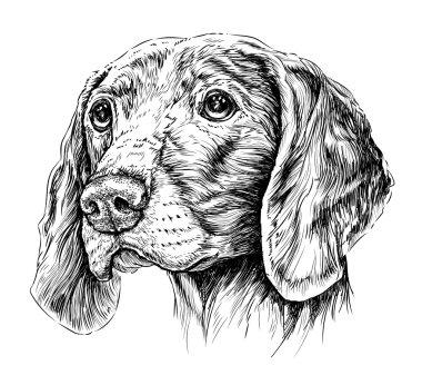 Sketch of Dog Weimar pointer.