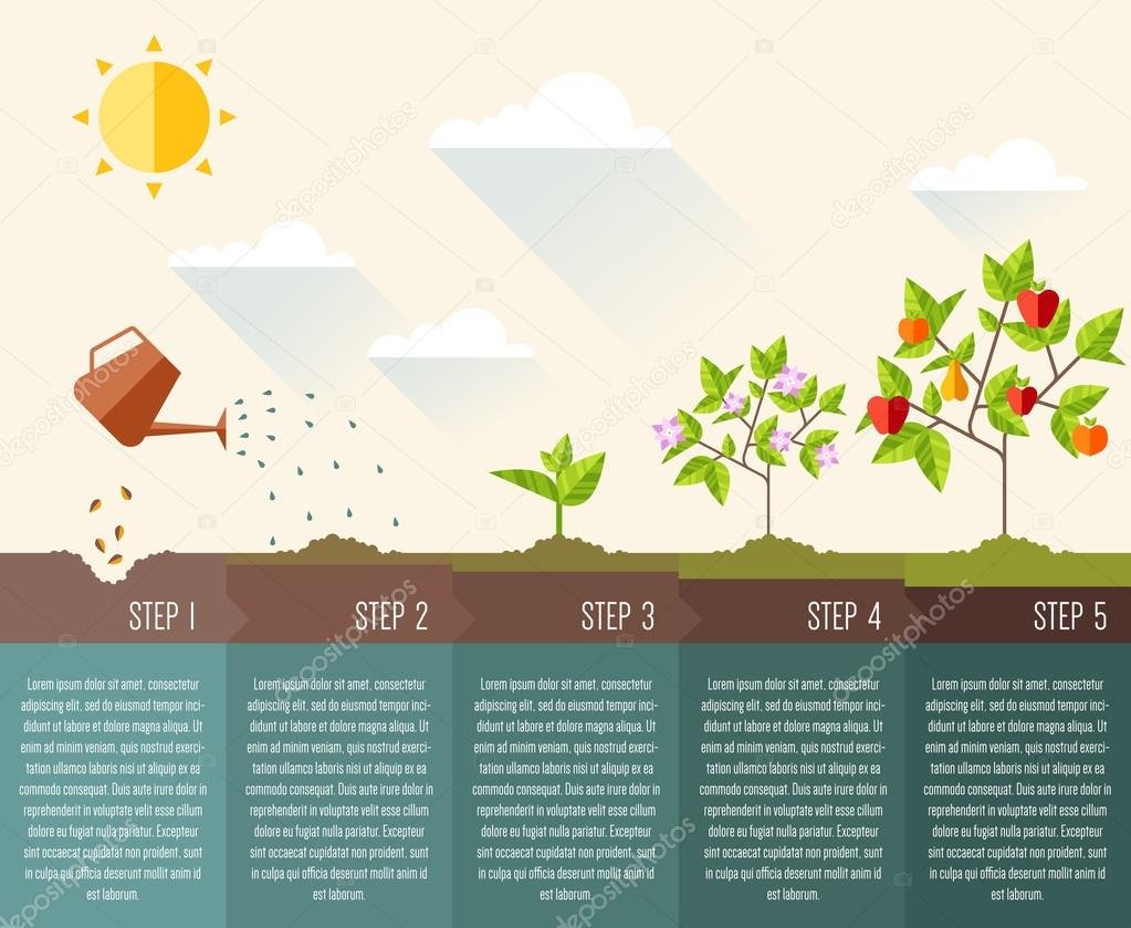 Steps of plant growth.