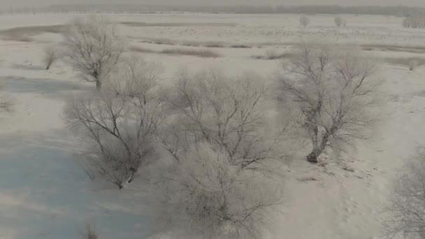 Let dronem nad krásnou přírodou. Stromy pokryté sněhem za mrazivého dne. Zimní pohádka