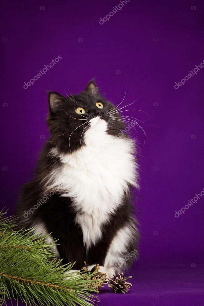 Černá kočička rty